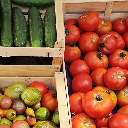 tomates, concombres